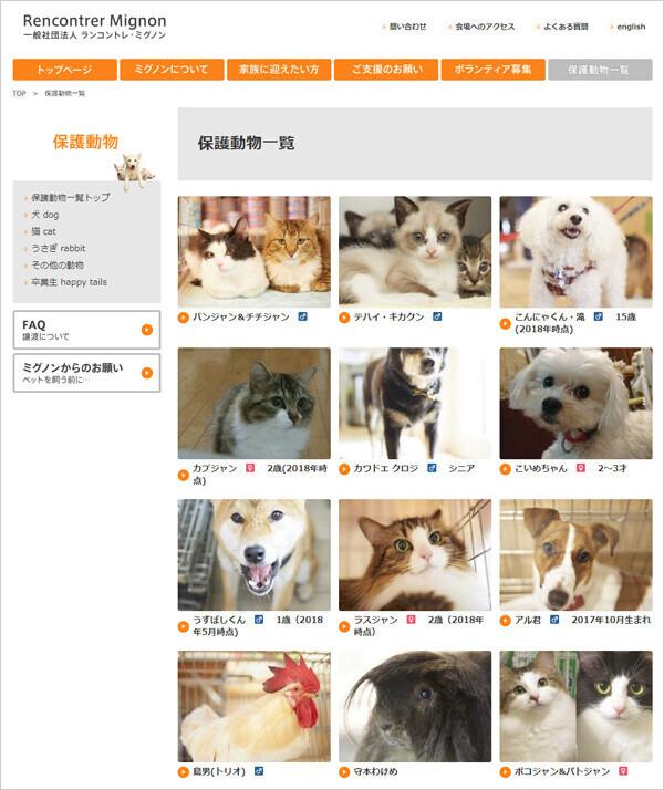 ミグノンのホームページで紹介されている、新しい家族を待つ子たち。友森さんは、これまで保護してきた2,000頭以上の動物すべて、付けた名前とともに記憶しているそう!