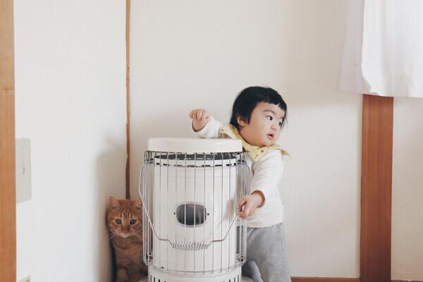 【いぬねこ うちのこ。】小さな兄弟と猫の金太郎とあずき/yukariiiさん