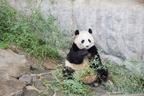 赤ちゃんパンダに世界遺産! 自然と触れあえる和歌山・子連れ旅行
