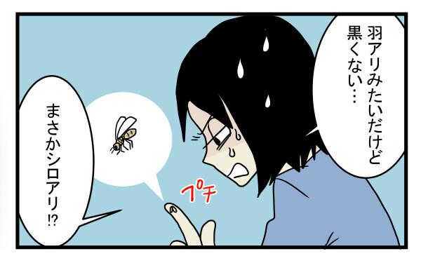 羽アリみたいだけど黒くない