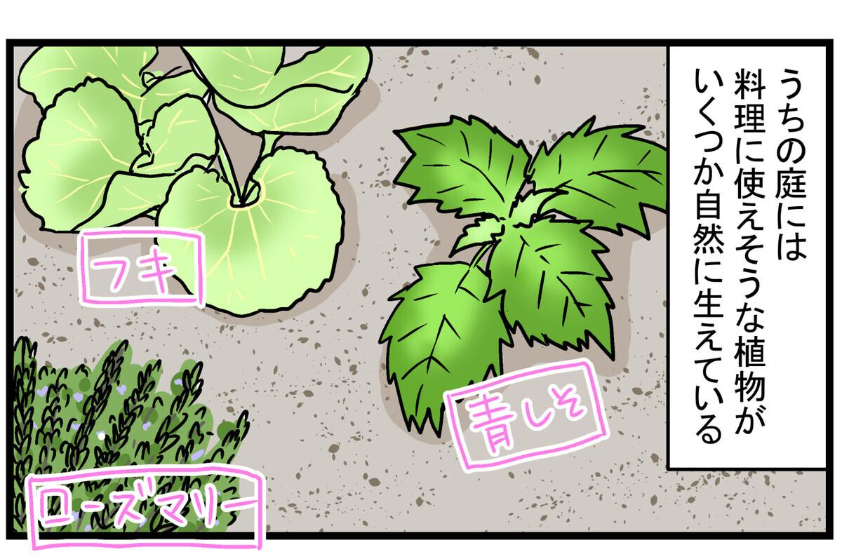 育て方次第では、厄介な雑草になることも!? 庭に生えてきた「ミント」の話【こどもと見つけた小さな発見日誌 Vol.15】