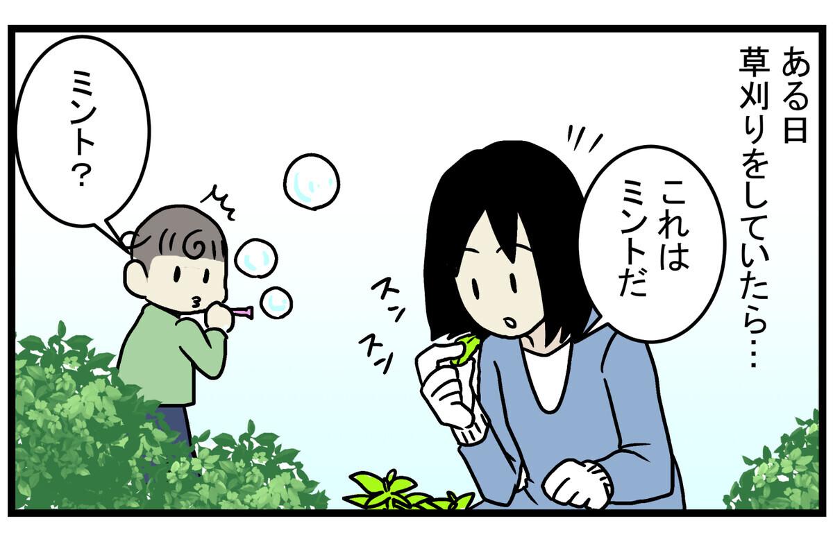 そんな庭にもう1種類、使えそうな植物が生えてきました