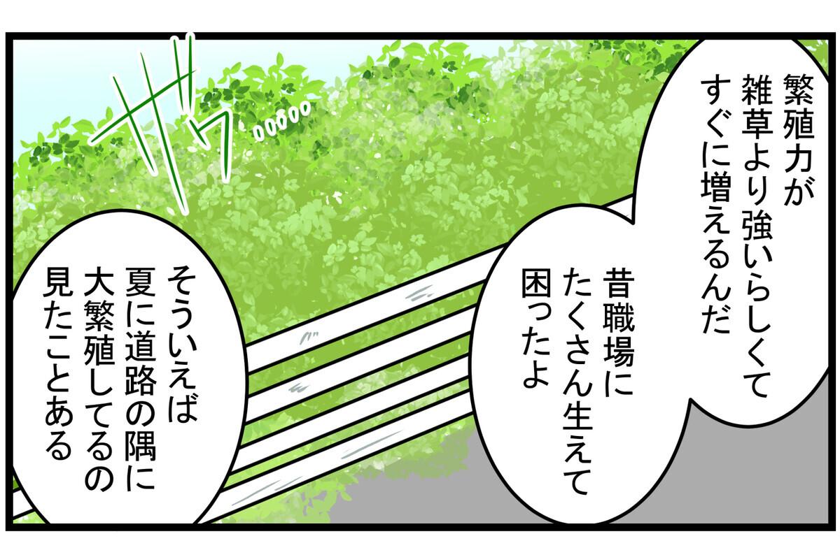「厄介な雑草」「大繁殖」なんてイメージ
