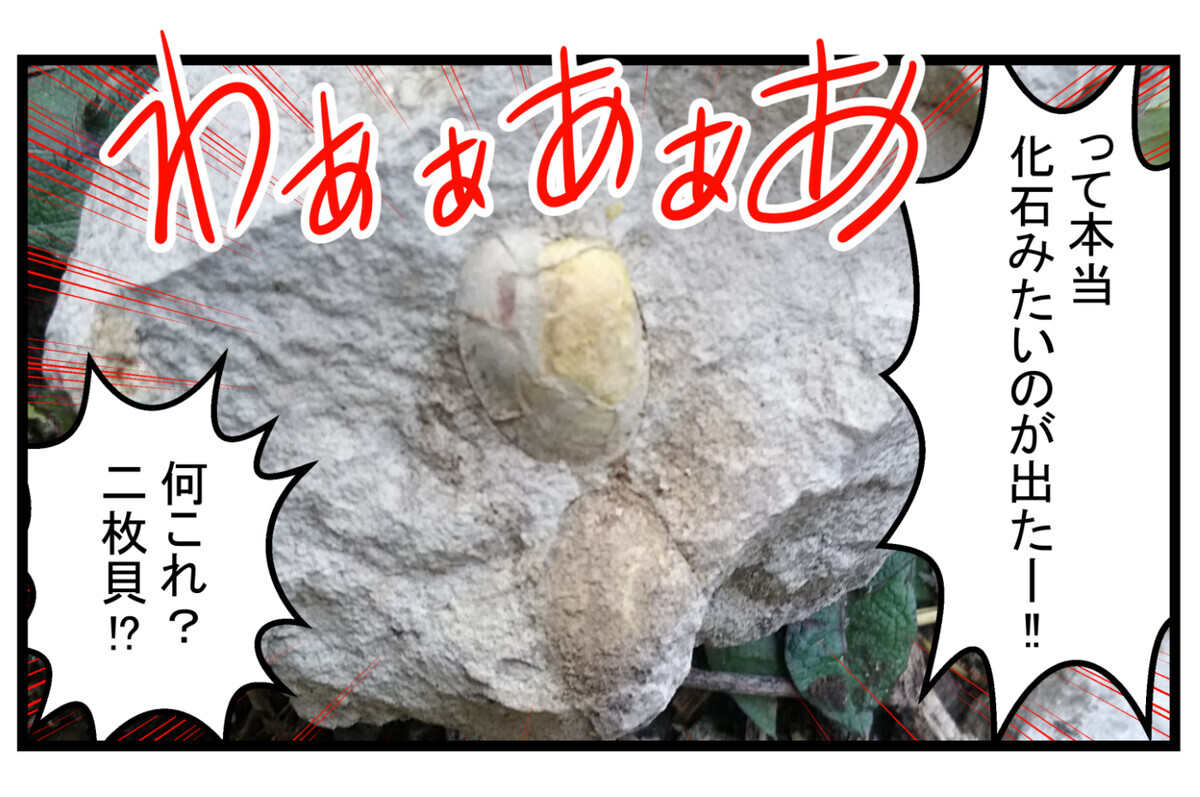 本当に化石のような貝でした