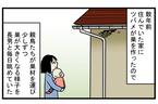 心待ちにしていたヒナの誕生…! 毎年、この時期になると思い出す「ツバメの巣」の話【こどもと見つけた小さな発見日誌 Vol.22】