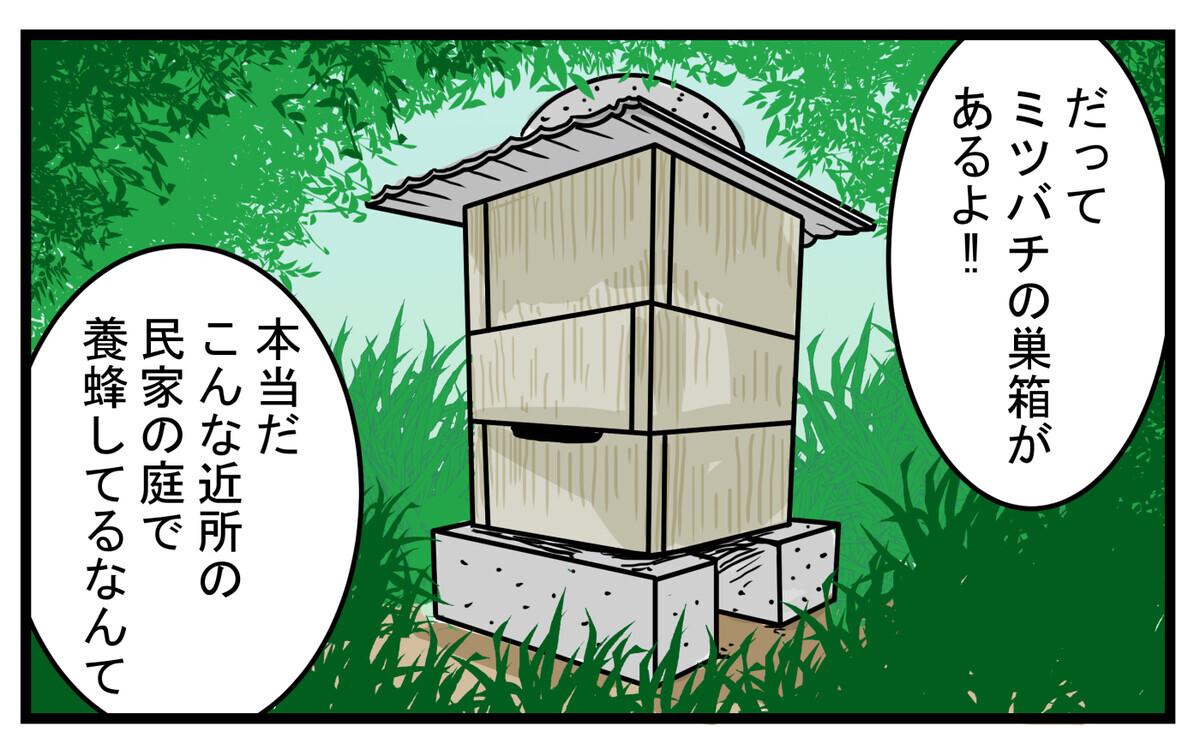長男がミツバチの巣箱を発見した
