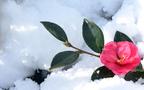 寒中見舞いのマナー 出す時期や喪中の方への書き方・文例をチェック