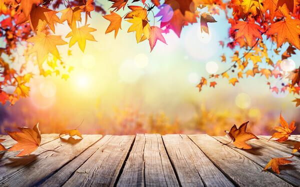 【1分で心理テスト】今年のあなたにおすすめ「〇〇の秋」とは?