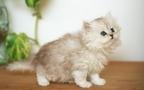 ペット貧乏にご用心!?  独身女性がペットを飼うための必要経費は月額3万円