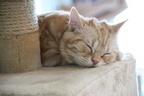 """猫と暮らしたい!そう思ったら知るべき""""保護猫里親""""システム"""