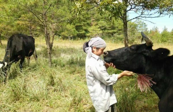 """「恋する牛」の牛乳は、季節ごとに味が変わる """"牛を牛らしく育てる""""メリット"""