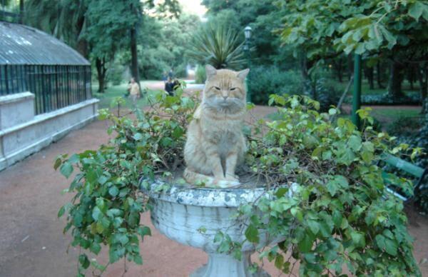"""「猫のいる街はいい街だ!」ブエノスアイレスにある""""猫パラダイス"""""""