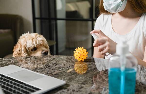 ウイルス、細菌、真菌の違い、知ってる?【専門医に聞くやさしい免疫学】