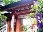 ご利益すごいらしい!?話題の恋愛パワースポット「東京大神宮」にガチ参拝!