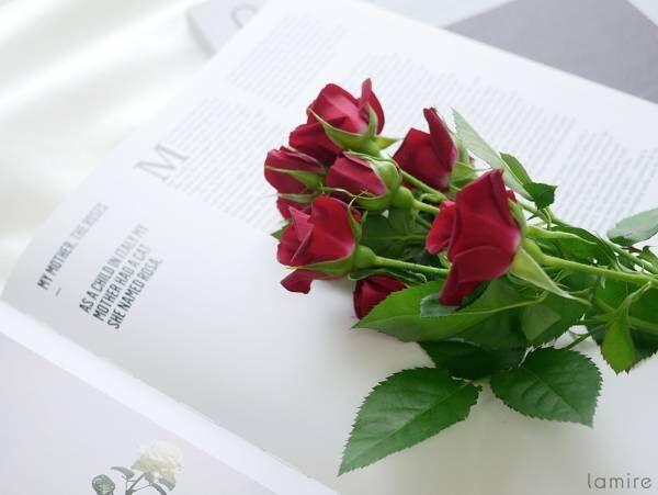 お花選びがもっと楽しくなりそうな予感♡実は奥が深い「花言葉」の世界