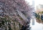 住みたい街東京!家族で探す子育て環境が充実した街まとめ