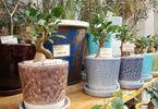 人気グリーンショップ店員に聞いた!「育てやすい観葉植物」5選と育て方のコツ