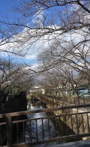 成城おすすめスポット10
