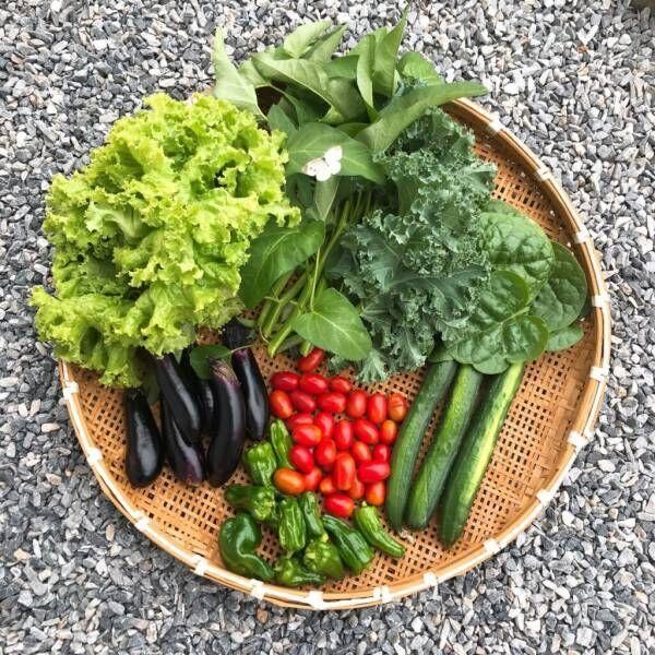 コスパも味も栄養価も最強! 初心者さんも失敗しない「簡単に野菜が育つ家庭菜園」のコツ