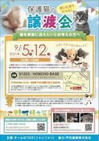『保護猫と里親様』をお繋ぎする活動をしているグループ『チームピコ22(ニャンニャン)』が保護猫 譲渡会を開催