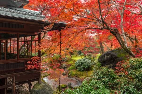貸し切りのなか、密を避け、京都の紅葉を愛でる京都ブライトンホテルの朝活 秋の特別早朝拝観プランを販売開始