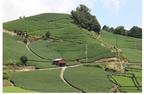 「『お茶の京都』プレミアムバスツアー」を販売開始