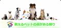 保護ペットのための新しい譲渡サイト「Matching Pet/マッチングペット」が10月20日に開設!保護ペットや高齢化により手放す方のためのマッチングサイト